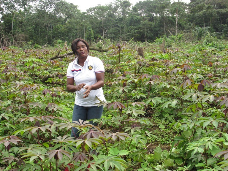 Mbigou et plantations